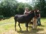 2008-2009 - Autour des ânes